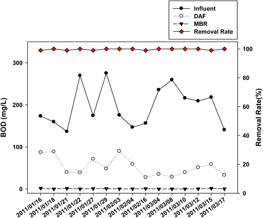 BOD5 concentrations in raw water, and DAF and MBR effluents with overall removal rate.