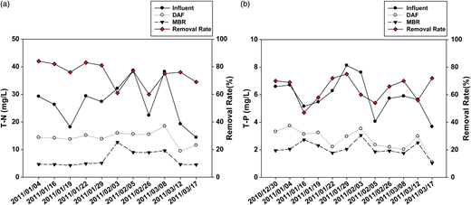 T-N (a) and T-P (b) concentrations in raw water, and DAF and MBR effluents with overall removal rate.