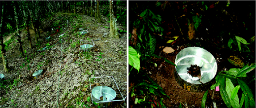 Morgan-type splash cups installed on the floor to collect soil sediment splashed from the ground surface in the bench-terraced rubber plantation (left) and the tropical rainforest (right).
