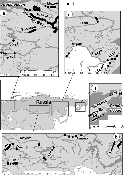 Location of studied braided reaches (1): (a) rivers of European part of Russia (Volga, Severnaya Dvina, Mezen basins with the exception of the Terek River which is beyond the map borders); (b) rivers of Siberia (Ob and Enisey basins and Kirenga River); (c) rivers of far east (Lena and Amur basins); (d) Kamchatka peninsula rivers.