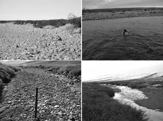 The upper left photograph shows the Lower Kuparuk site, looking downstream, during a dry spell and the upper right photograph shows the Lower Kuparuk site, looking across the channel, during high flows in the fall. The bottom left photograph shows the Upper Kuparuk site, looking upstream, during a dry spell and the bottom right photograph shows the Upper Kuparuk site, looking upstream, with surface flow in the fall.