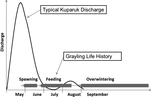 Relationship between timing of Arctic grayling migrations and typical hydrologic flow regime in non-glacial fed Arctic rivers.