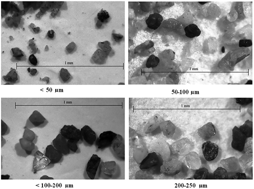 Microscopic view of different experimental sediment size groups.