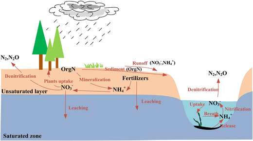 Transformations between different forms of nitrogen in the soil profile and river segment described in the GBNP model.
