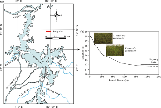 Location of the study site in the Poyang Lake wetland (a) and the distribution of studied wetland vegetation communities (b).