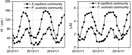 Variations in average plant height (H) and LAI in the A. capillaris and P. australis communities.