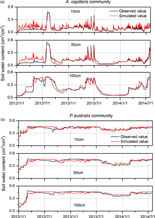 Comparison of observed and simulated soil moisture at three depths for calibration (January 1, 2012–May 31, 2013) and validation (June 1, 2013–July 30, 2014) periods in the A. capillaris (a) and P. australis (b) communities.