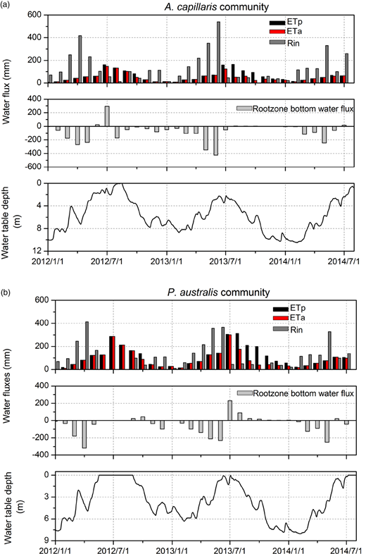 Monthly variations of the simulated water fluxes across the top boundary and the lower root zone in A. capillaris (a) and P. australis (b) communities.