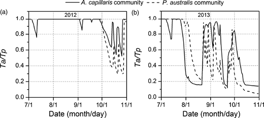 Ta/Tp ratio of the A. capillaris and P. australis communities in the main growth stage of high ((a) 2012) and low ((b) 2013) water table years.
