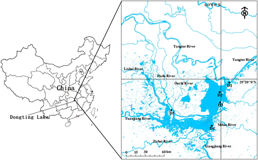 Location of sampling sites (D1–D5) in Dongtin Lake, China.