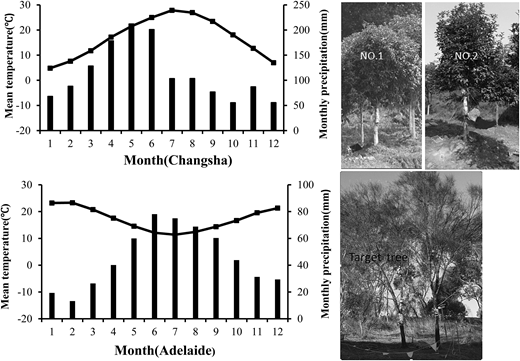 Climatic characteristics and the examined trees at the two study sites: Changsha and Adelaide.