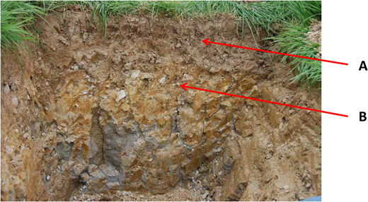 Both Halstow and Hallsworth soil series at North Wyke have clay loam soil to 30 cm depth (soil horizons marked A) over a dense impermeable clay subsoil with coarse prismatic soil structure (soil horizons marked B). Photo shown is of a Hallsworth soil.