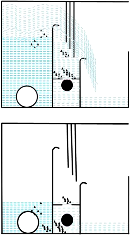 Operation of the Comb Separator Phase 1 (top) and Phase 2 (bottom).