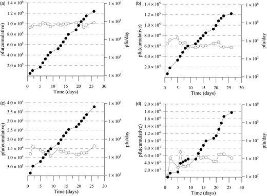 Phages recovered during rinsing the columns shown in Figure 2(b) (which had been percolated with phages at 1 (a), 0.5 (b), 0.25 (c), and 0.1 (d) m/d over 28 days) with tap water free of phages at a PWV of 2.6 m/d. Each column was connected to a reservoir, and PWV in all four columns adjusted to 2.6 m/d. The rinsing was interrupted at weekends, so that over the 26 days of the measuring period the columns were running for only 18 days. Symbols: (○) number of pfus eluted per day; (●) number of eluted pfus cumulated up to the time of the measurement. The concentrations of the phages in the exfiltrates have been corrected for die-off assuming a T90 of 40 days.
