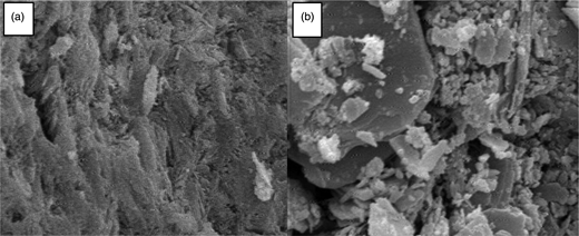 SEM images of (a) natural zeolite and (b) SMZ.