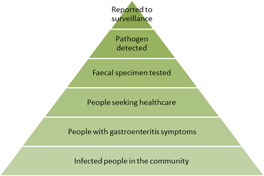 Reporting pyramid for gastroenteritis.