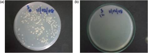 Colony-forming units (cfu) in water treated with Acacia nilotica plated at the beginning of treatment (a) and after 1 hour (b).