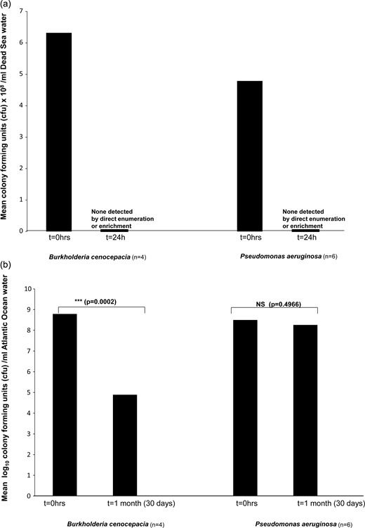 Mean survival of clinical P. aeruginosa and B. cenocepacia at 20 °C: (a) in Dead Sea water and (b) in Atlantic Ocean water.