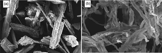SEM of (a) RS and (b) IOC-RS.