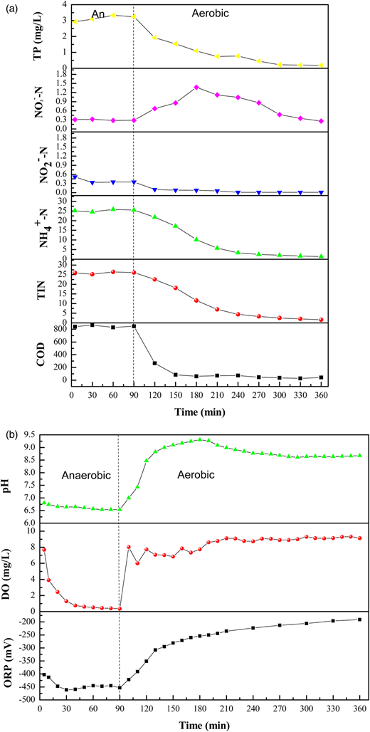 Degradation of pollutants, pH, DO and ORP in typical cycle on the 47th day: (a) variation of COD, TIN, NH4+-N, NO3−-N and NO2−-N in typical cycle; (b) variation of pH, DO and ORP in typical cycle.