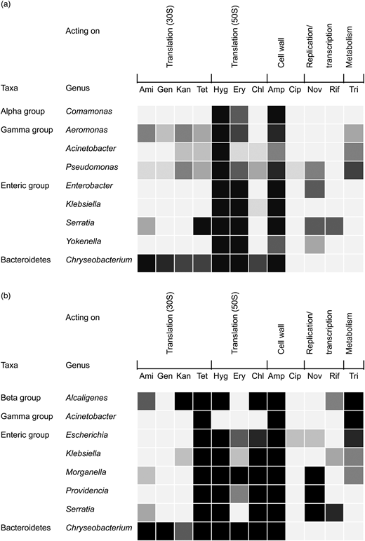 Antibiotic resistance profile of main bacterial genera according to taxonomic classification and mechanisms of action. (a) Penicillin-resistant bacteria; (b) tetracycline-resistant bacteria. Darkness indicates degrees of resistance. Alpha, Beta and Gamma groups indicate Alpha-, Beta- and Gammaproteobacteria, respectively. Ami, amikacin; Gen, gentamycin; Kan, kanamycin; Tet, tetracycline; Hyg, hygromycin; Ery, erythromycin; Chl, chloramphenicol; Amp, ampicillin; Cip, ciprofloxacin; Nov, novobiocin; Rif, rifampicin; Tri, trimethoprim.