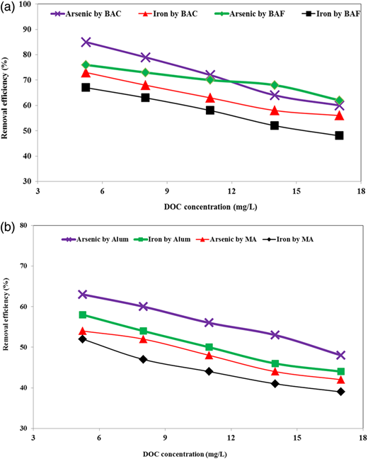 Effect of DOC concentration on arsenic and iron removal efficiency using (a) biological treatment (contact time 15 min) and (b) coagulation (5 mg/L).