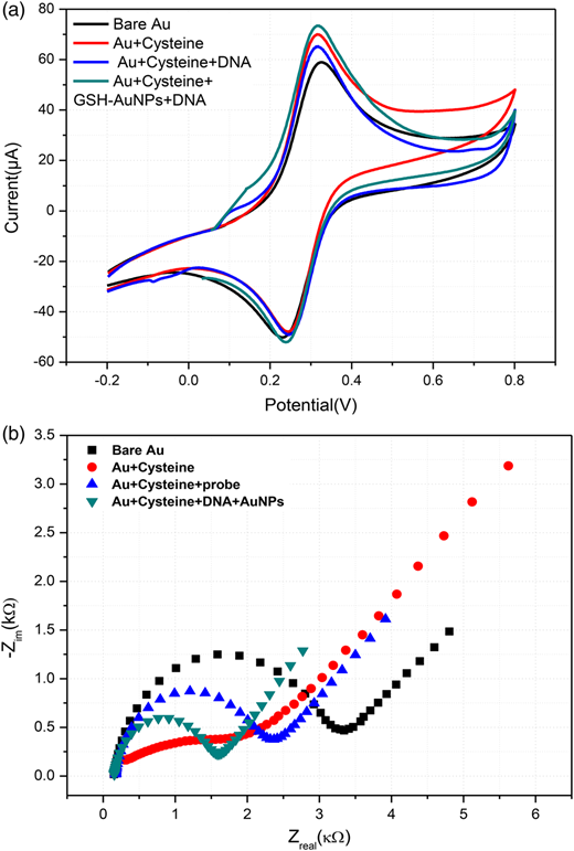 (a) Cyclic voltammograms of Au bare electrode, Au/cysteine, Au/cysteine/DNA, Au/cysteine/GSH-Au NPs/DNA modified electrodes (scan rate: 50 mV/s) and (b) Nyquist plots for bare gold electrode, Au/cysteine, Au/cysteine/DNA and Au/cysteine/GSH-Au NPs/DNA modified electrode in 5 mM of ferri/ferrocyanide redox couple.