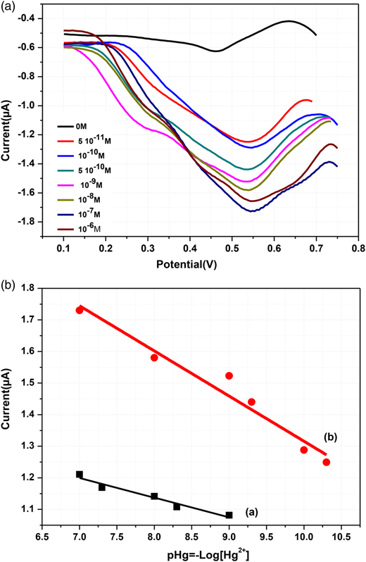 (a) Differential pulse voltammograms of cysteine/GSH-Au NPs/DNA modified electrode for different concentration of Hg2+. (b) Calibration curves for (a) cysteine/DNA and (b) cysteine/GSH-Au NPs/DNA modified electrode.