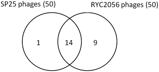 Diagram showing numbers of pooled samples that presented detectable phages of B. fragilis strains SP25 and RYC2056 (higher than 3.2 PFU g−1).