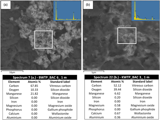 Energy dispersive X-ray microanalysis of biogenic minerals formed on BAC media at 1 m depth from the Bendigo WTP (a) and the Kyneton WTP (b). The images indicate the location of the sample analysed and the inset shows the spectra of the minerals observed.
