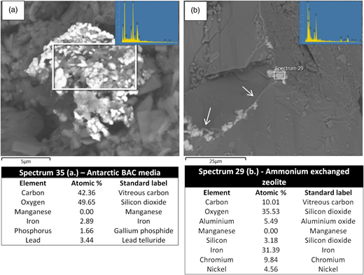 Energy dispersive X-ray microanalysis of biogenic mineral formation on Antarctic BAC media (a) and ammonium exchanged zeolite (b) within laboratory flow cells. Images show that iron is the most abundant mineral within these deposits. The white arrows (b) indicate clusters of biogenic minerals together with EPS on the ammonium exchanged zeolite surface. The images indicate the location of the sample analysed and the inset shows the spectra of the minerals observed.