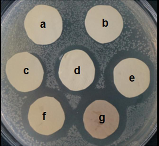 The anti-bacterial results for E. coli on the different membranes: (a) pure PSf membrane; (b) SiO2/PSf hybrid membrane with 0.45 wt% SiO2; Ag-SiO2/PSf hybrid with different contents of Ag-SiO2: (c) 0.15 wt%, (d) 0.3 wt%, (e) 0.45 wt%, (f) 0.6 wt%, (g) 0.75 wt%.