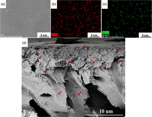 (a) SEM image of the surface of Ag-SiO2/PSf hybrid membrane with 0.45 wt% of Ag-SiO2 nanohybrid; (b) Si-mapped distribution of the corresponding membrane; (c) Ag-mapped distribution of the corresponding membrane; (d) SEM image of the cross-section of the hybrid membrane.