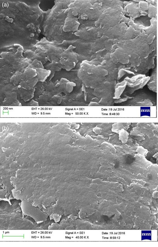 SEM images of (a) bentonite and (b) montmorillonite nanoparticles.