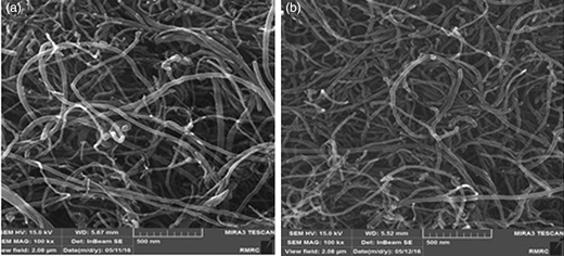 SEM of MWCNTs (a) before and (b) after caffeine adsorption.
