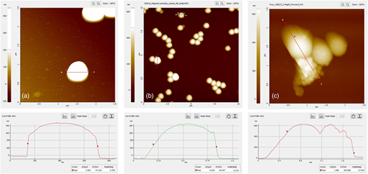 AFM images: (a) fluoromagnetic particles; (b) functionalized particles; (c) biofunctionalized magnetic particles after exposure to 106 VP/L of rotavirus.