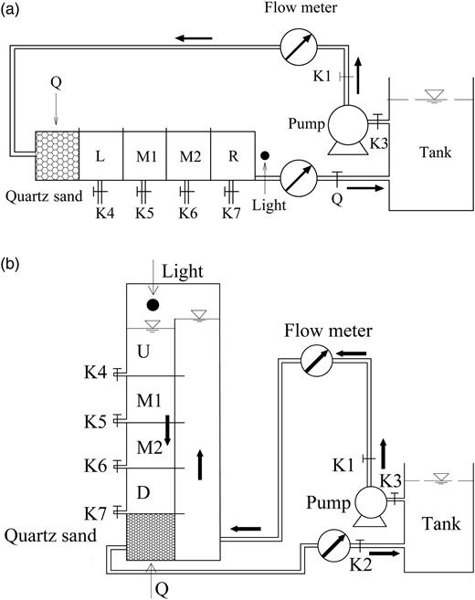 (a) Horizontal experimental set-up and (b) vertical experimental set-up. K1–K7 are the water valves, in which K1–K3 were used to control the water flow rate while the rest were used to discharge water and collect D. magna after irradiation. L, M1, M2, R, U, and D are the chamber numbers.