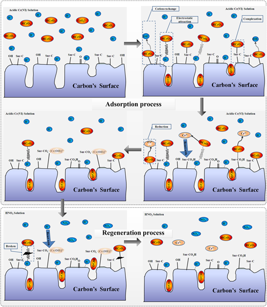 Graphical representation of the adsorption and regeneration mechanism.