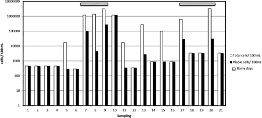 Concentration levels of H. pylori cells as determined by qPCR in surface water samples; total cells (white bars), living cells (black) and rainy days (shaded bar).