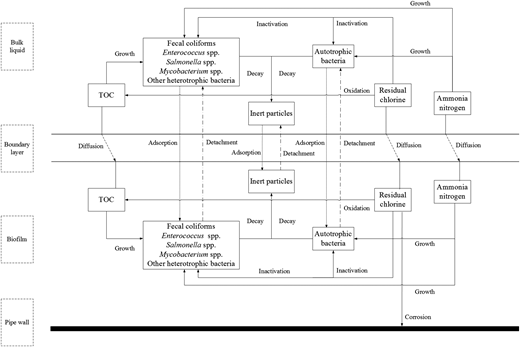 Conceptualization of the multi-species water quality model for RWDSs.