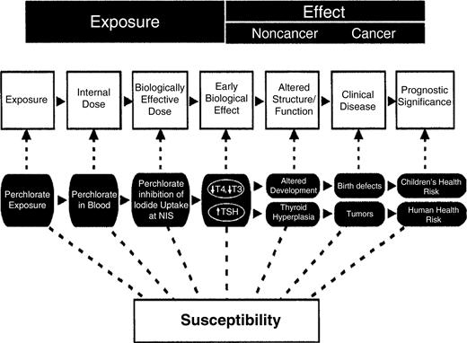 Exposure–dose response continuum.