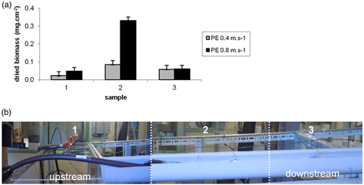 Dried biomass collected in different PE sections (a) and its configuration (b) during experiment E1.