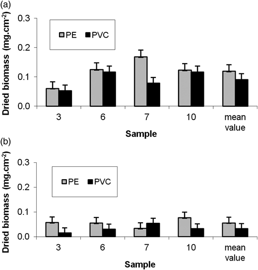 Dried biomasses measured in PVC and straight PE pipes (a) at 0.8 m s−1 and (b) 0.4 m s−1 after 28 days of the experiment E1.