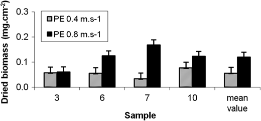 Biofilm dry mass measured at 0.8 m s−1 and 0.4 m s−1 in straight PE pipes after 28 days of experiment E1.