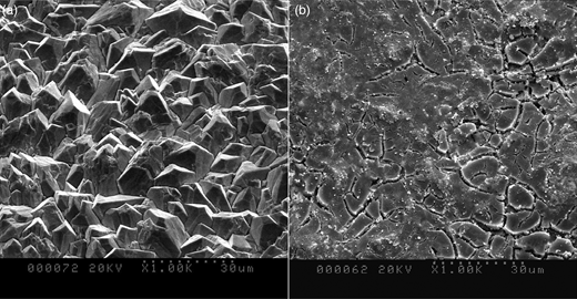 SEM images of a PbO2 electrode (a) and an SnO2 electrode (b).