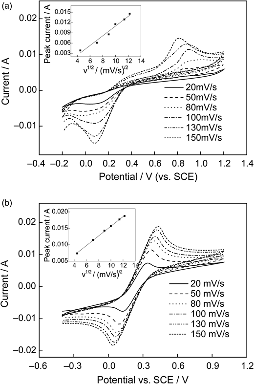 Cyclic voltammograms of PbO2 (a) and SnO2 (b) electrodes in 1.0 mol L–1 KCl containing 5.0 mmol L–1 K3Fe(CN)6 and 5.0 mmol L–1 K4Fe(CN)6. Insets show the plots of peak current versus the square root of scan rate.