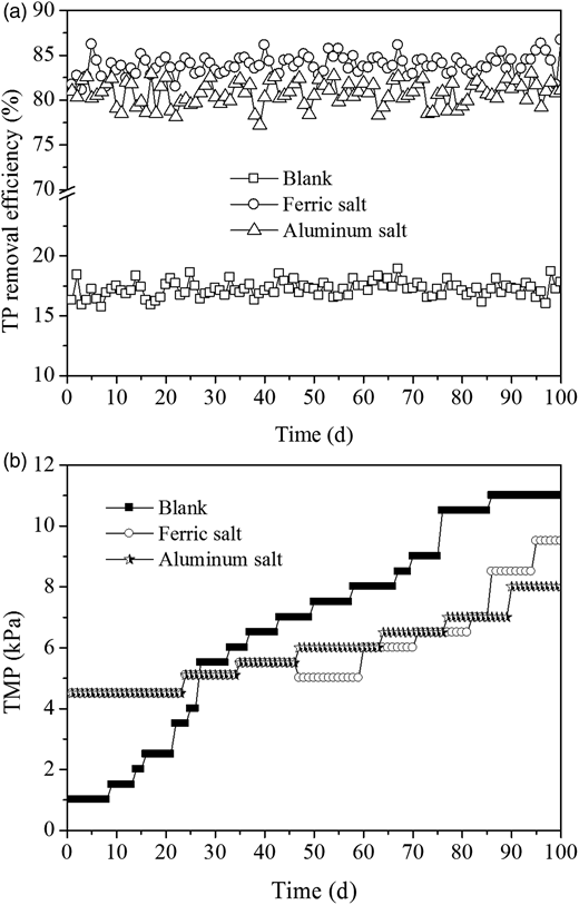 Effects of ferric and aluminum salts continuous dosing on TP removal and TMP.