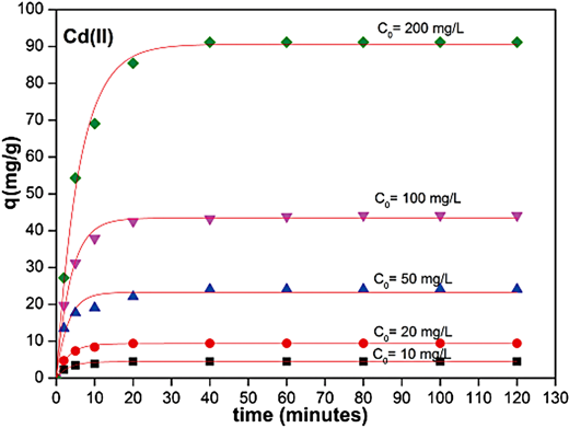 Relationship between contact time and adsorbed Cd(II) at different initial Cd(II) ion concentrations (adsorption conditions: ZXCG dosage: 0.2 g, agitation speed: 300 rpm, pH 4.0, temperature: 27 °C).