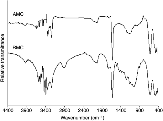 FT-IR spectra of RMC and AMC adsorbents.