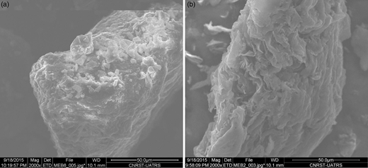 SEM images of RMC (a) and AMC (b).